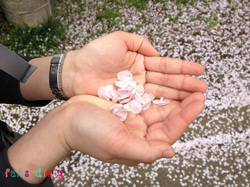 2012blog078.jpg